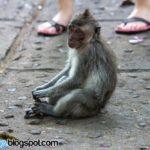 Nusa Dua Bali Trip (Part 3) – Monkey Forest Sanctuary, Batuan Temple & Cock Fighting